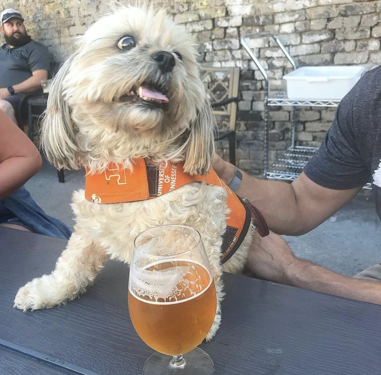 Crafty Bastard Brewery is very dog friendly in Knoxville Tennessee