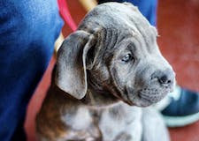 7 Dog-Friendly Businesses