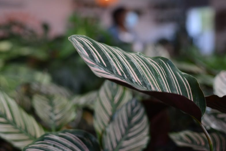 A glimpse of the indoor jungle that is Oglewood Avenue